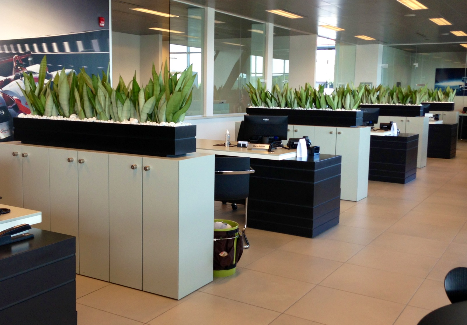 Top 8 Natural Green Plants Suits Your Office Indoors